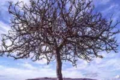 Living-jpm-trees-roots
